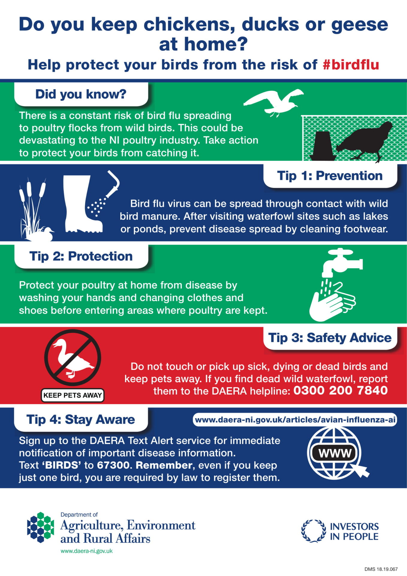18.19.067 DAERA Avian Influenza A4 Poster(3) 1 (1)