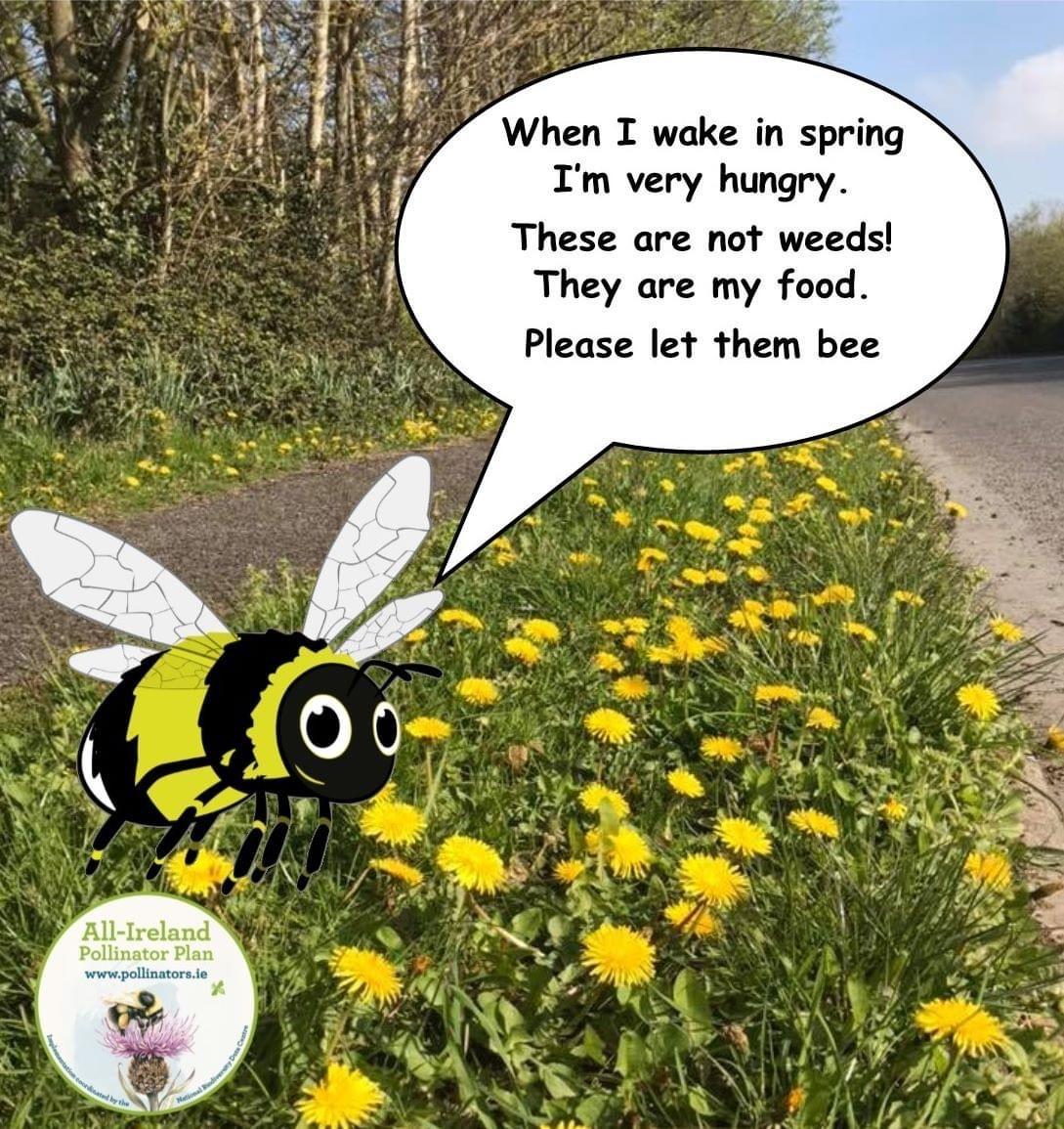 Bumblebees need dandelions