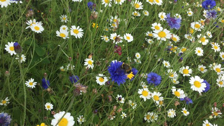Grow your own mini meadow
