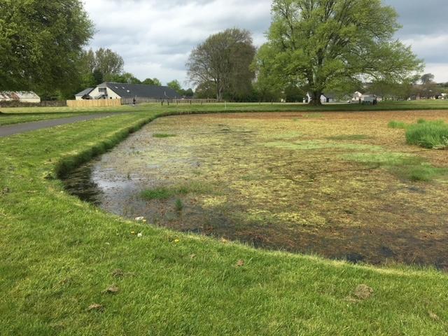 Ecclesville Pond   Summer