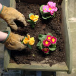 Compost bin 3
